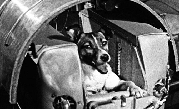 ไลก้า (Laika) สุนัขตัวแรกที่ถูกส่งขึ้นสู่อวกาศ